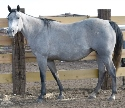 Kros Ramblin Girl - Blue Roan