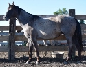 Wendy Blantonwood - Blue Roan