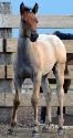 2019 Lot 06 Miss Sams Rosie - Bay Roan