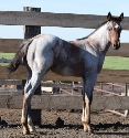 2019 Lot 30 One Smokin Hot Chick - Bay Roan