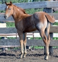 2019 Lot 34 Princess Makes Music - Red Roan
