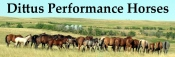 Dittus Performance Horses
