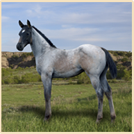 Froelich Legacy Quarter Horses: Blue Roan Horses For Sale